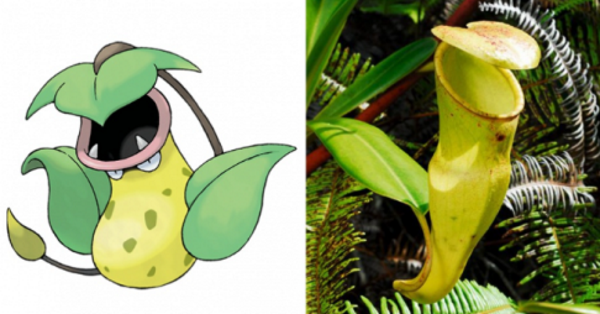 7 Totally Bizarre Pokemon Based On Real Life Wonders Of Nature